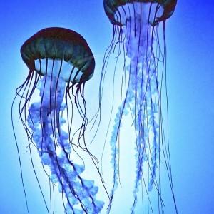 boston_aquarium-02
