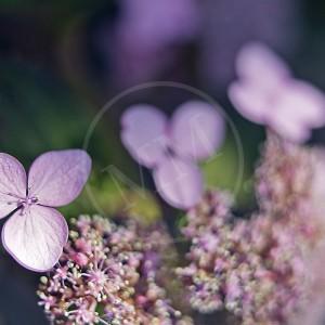Floral - 3