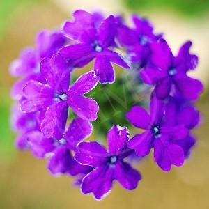 Floral - 1