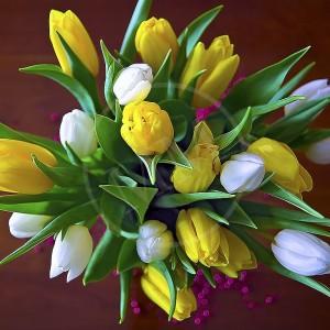 Tulips - 1